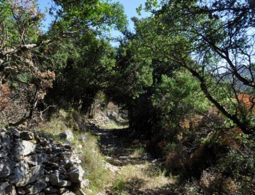 Trail 1 | Neda – Abeliona – Epicurius Apollon