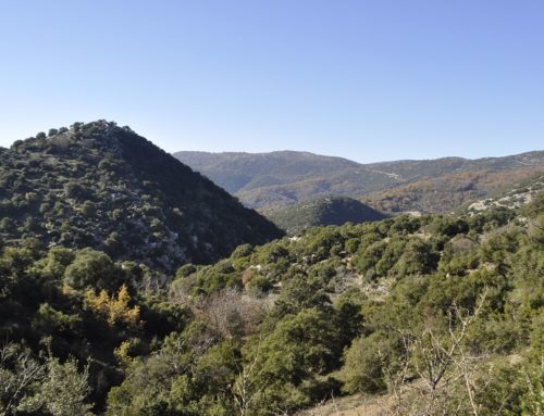 Trail of Pan | Sanctuary of Pan – Neda – Ano Karyes